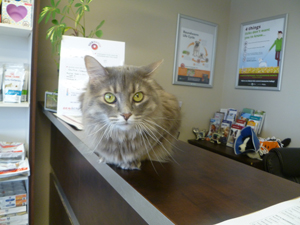 Cat on Counter, Rosswell Animal Hospital