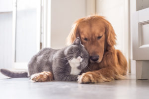 cat and dog,